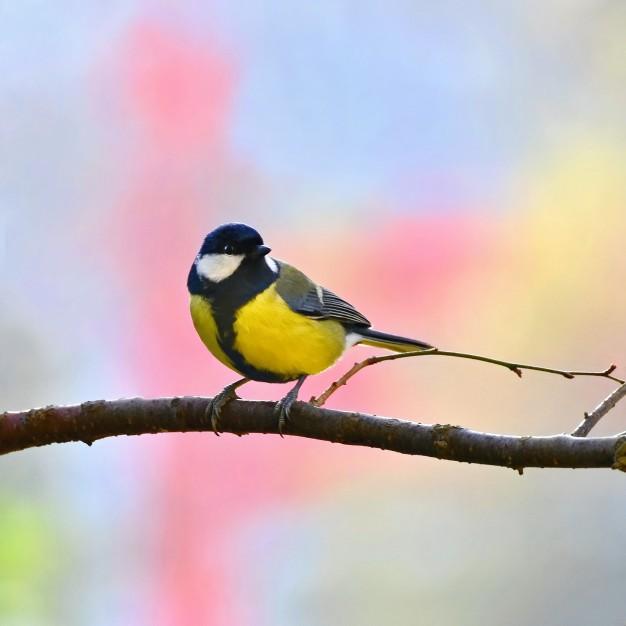 Byd fuglene i din have velkommen